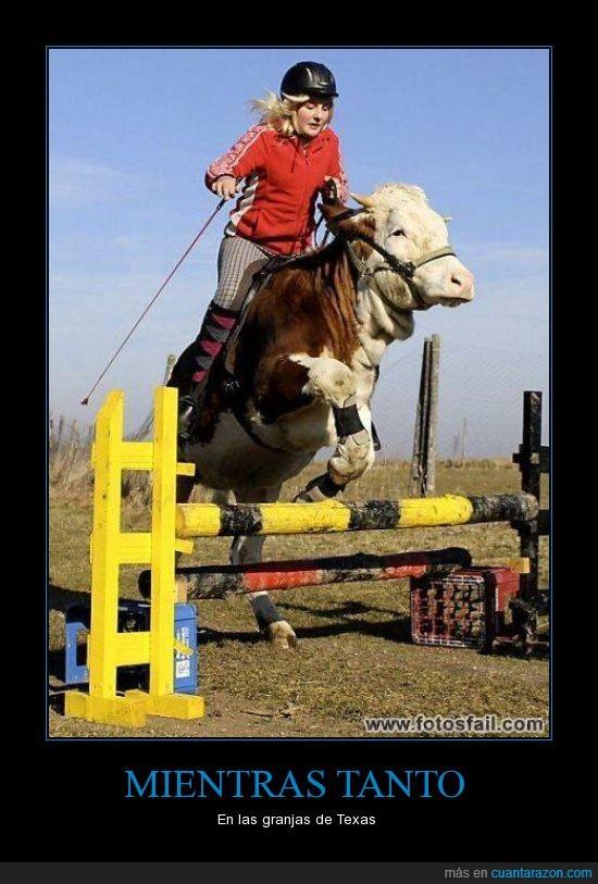 caballo,salto,vaca
