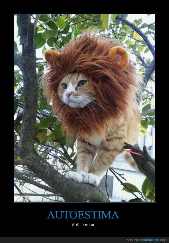 animal,autoestima,foto,gato,león