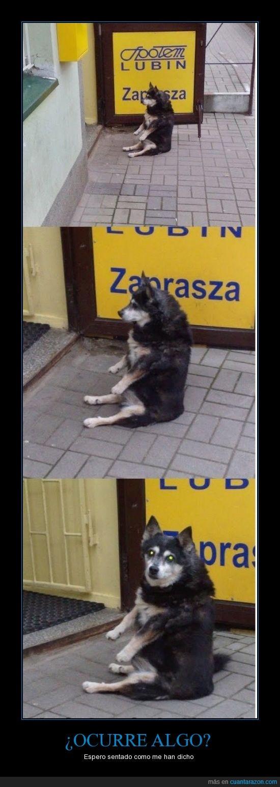 humano,perro,sentado