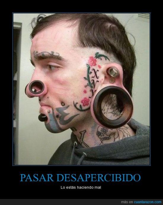 cani,desapercibido,lo estas haciendo mal,orejas,piercing