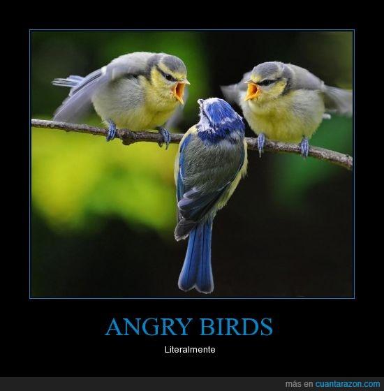 angry birds,pájaros,twitter
