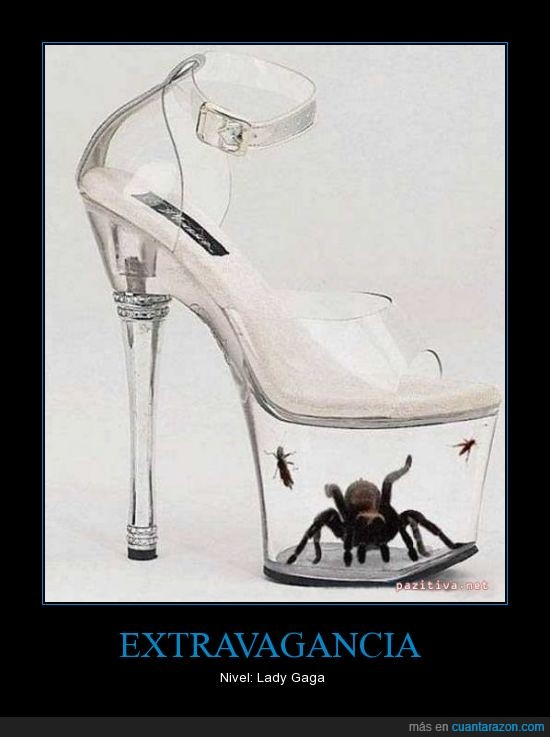 araña,artropodo,lady gaga,tarantula,transparente,zapato