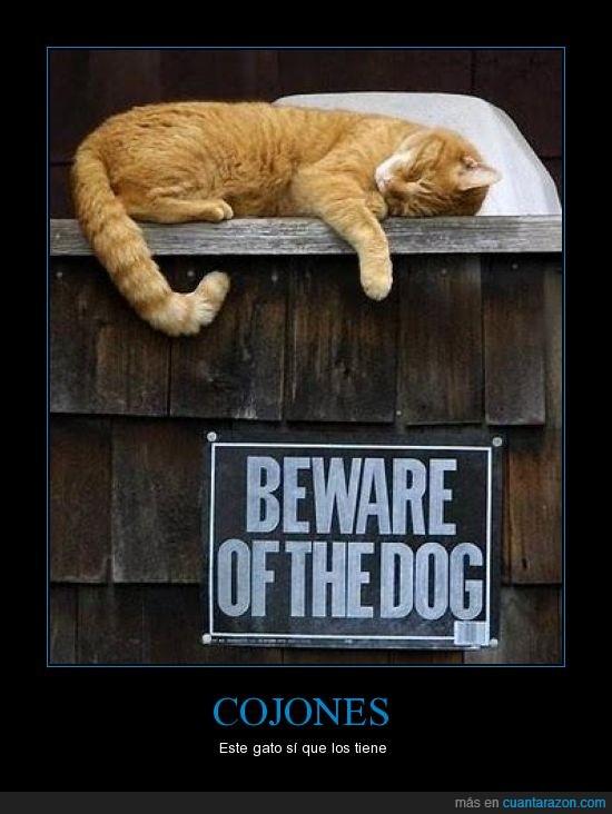 gato,perro,señal
