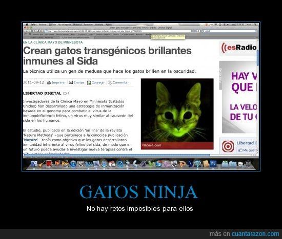 fluorescente,gato ninja,Sida