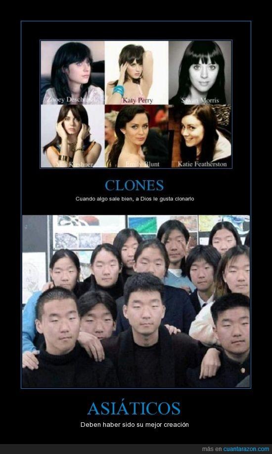 asiaticos,clonar,creacion,mejor