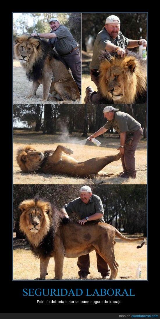 leon,peinar,trabajo,valor