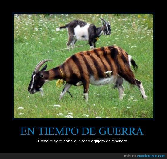 cabra,tigre