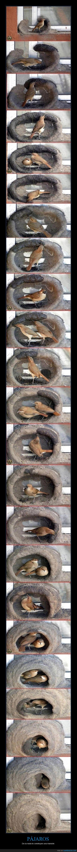 hermoso,nido,pajaro