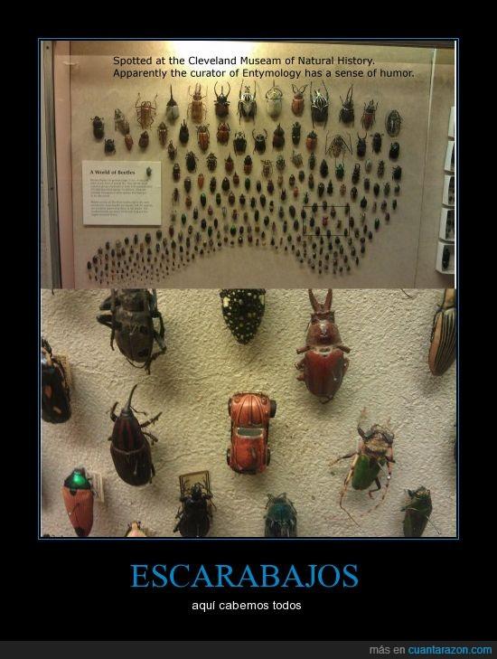 coche,escarabajo,historia,museo