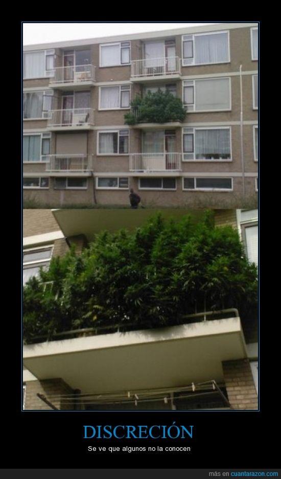 balcón,discrección,edificio,fumar,marihuna,plantación,plantas,terraza