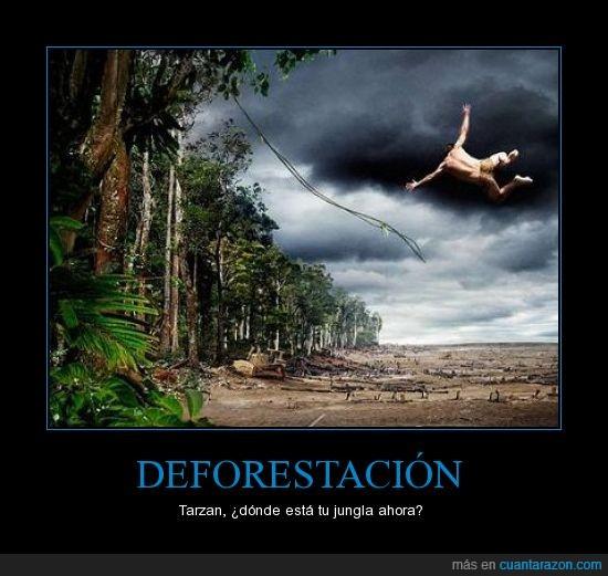 deforestacion,sufrir,tarzan