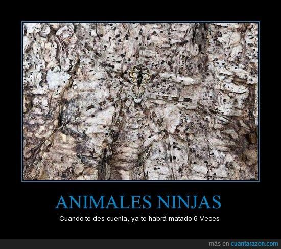 animales,arañas,camuflaje,ninja