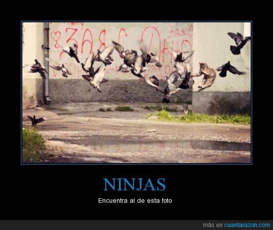 gato,ninja,palomas,volar