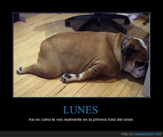 lunes,perro,sueño
