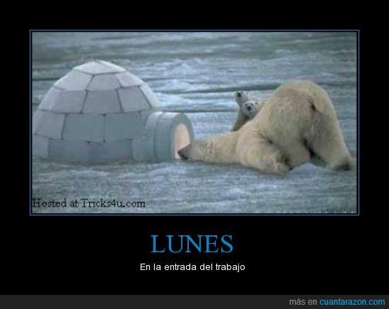 iglú,lunes,oso,trabajo