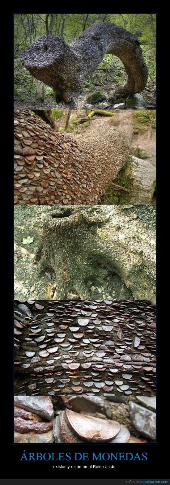 arbol,monedas,reino unido,vinz