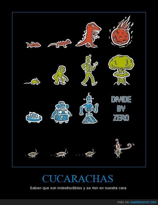 cucarachas,evolución,selección