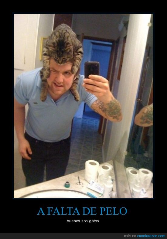calvo,gatos,lavabo,pelo