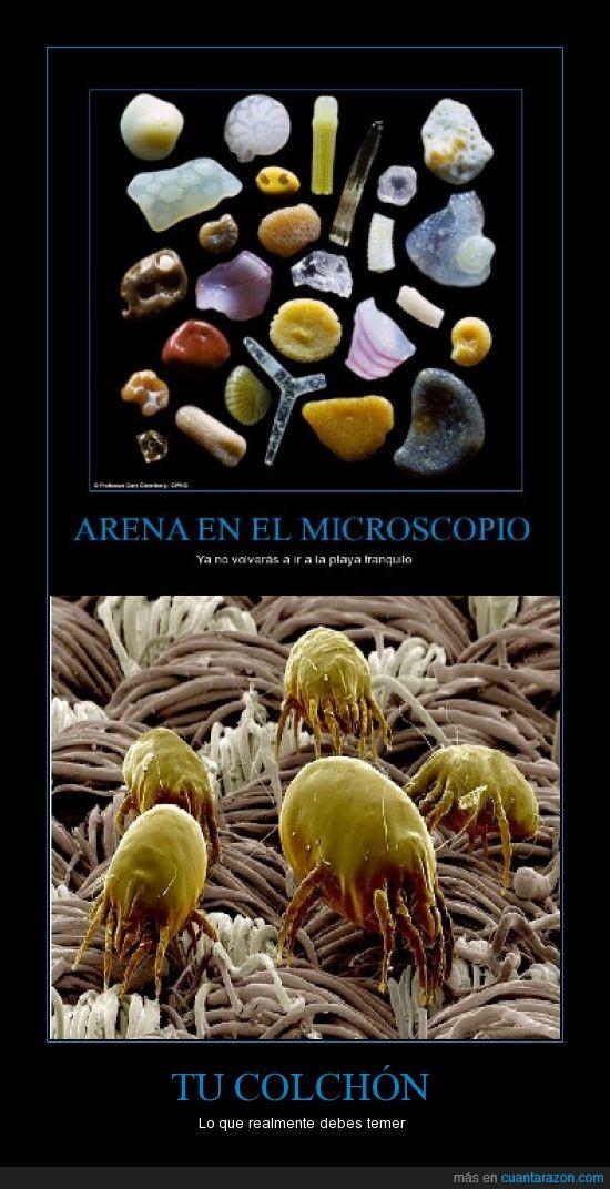 Acaros,arena,colchón,microscopio,miedo,monstruos