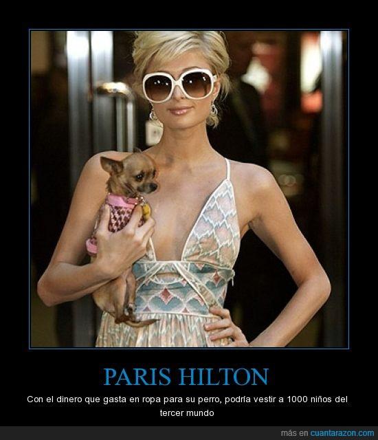 1000,chihuahua,hilton,Paris hilton,perro