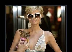 Enlace a PARIS HILTON