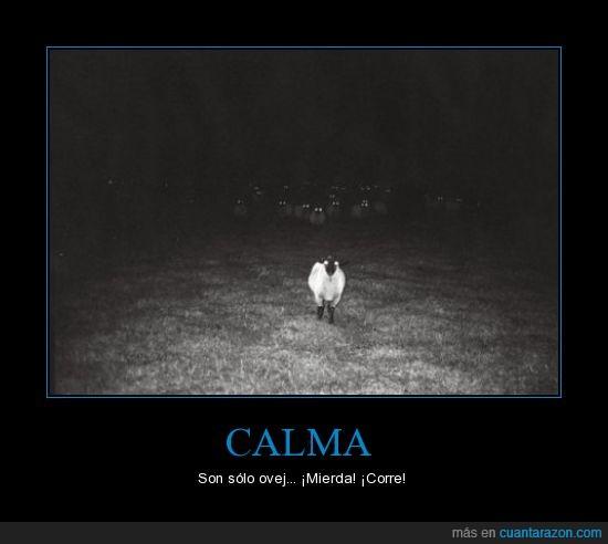 miedo,noche,ovejas