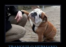 Enlace a TRANQUILO HERMANO