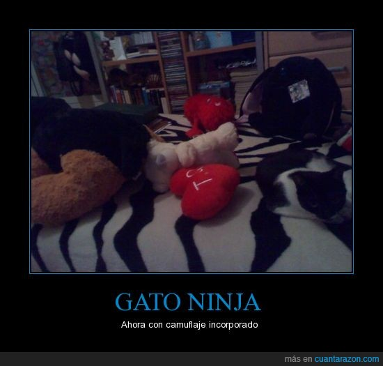 camuflaje,gato,gatos,ninja