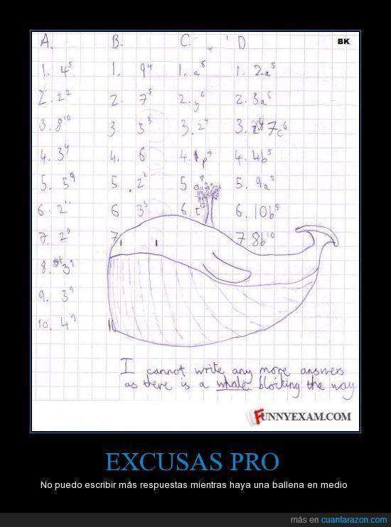 ballena,deberes,espacio,responder,respuestas