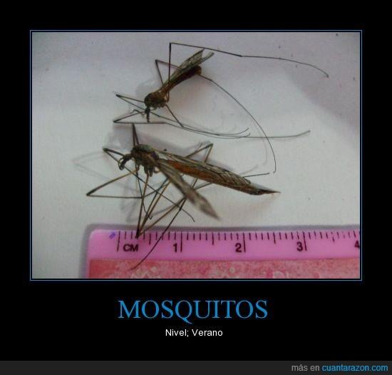 enormes,mosquitos,verano