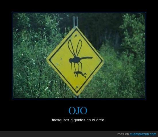 cartel,humano,mosquitos