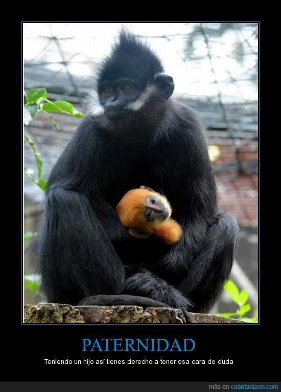 Monos,Paternidad,pelirojo