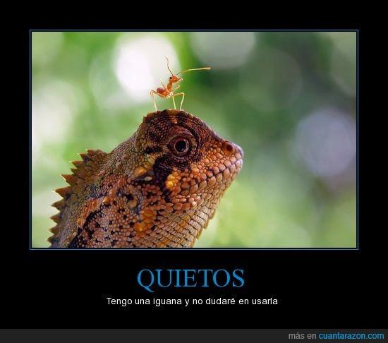 hormiga,iguana,WTF,xd