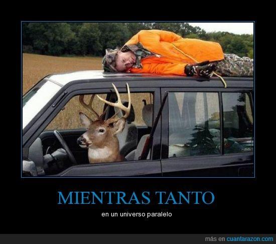 cazador,ciervo,coche,renom