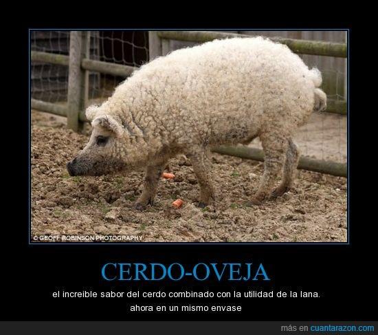 animal,cerdo,mix,oveja