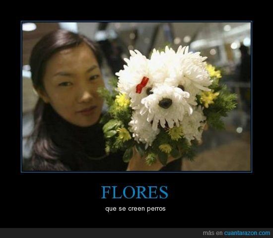 flores,perros,ramo