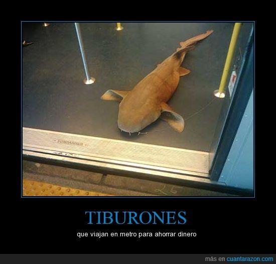 metro,miami,puerta,tiburón,wtf