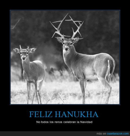 cristiano,estrella david,feliz,hanukha,judío,navidad,religión,reno