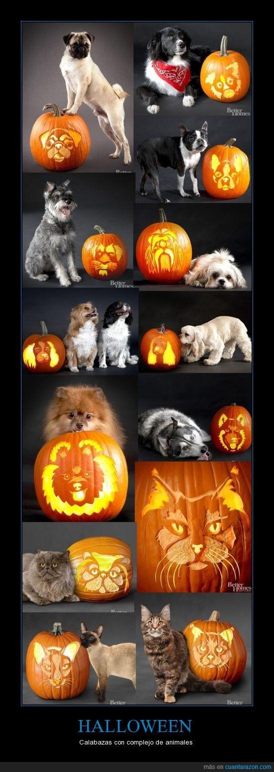 Calabaza,Halloween,perros