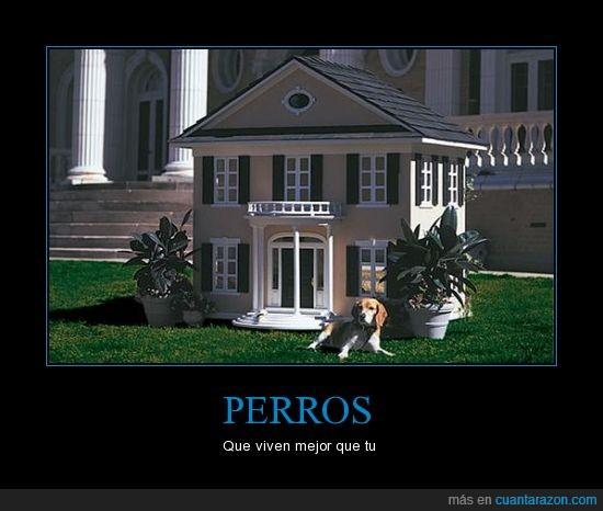 casa,mejor,perros,vida
