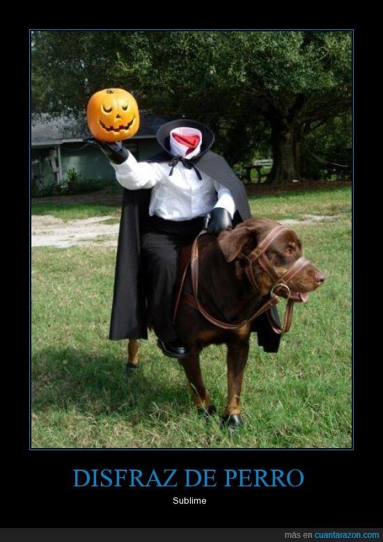 cabeza,calabaza,disfraz,halloween,perro