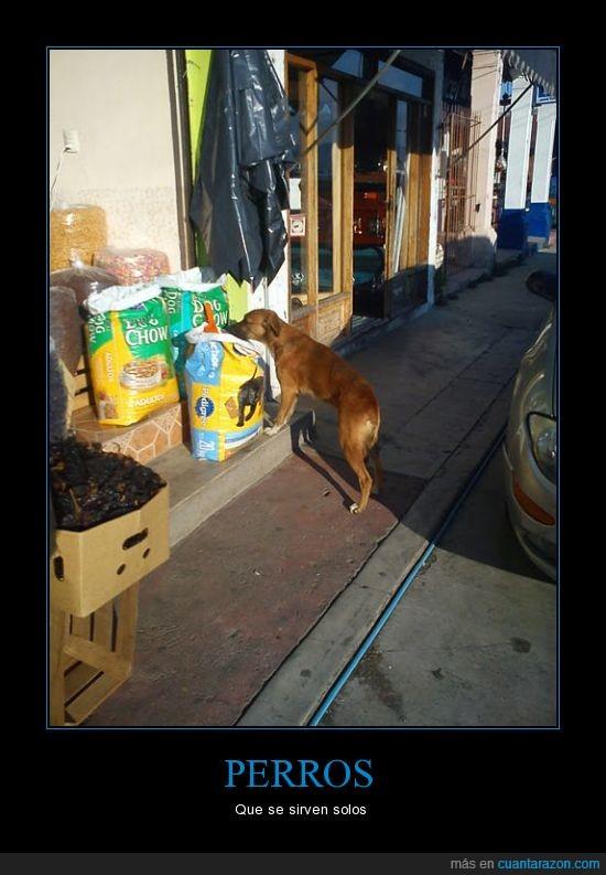 comida,perro,servirse