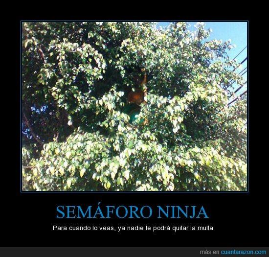 árboles,escondido,multa,semáforo