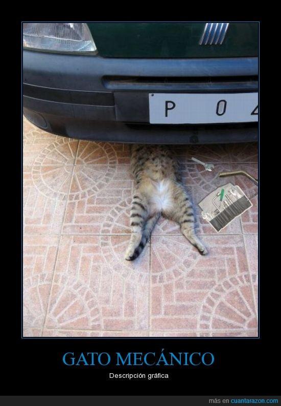 coche,Gato,mecánico
