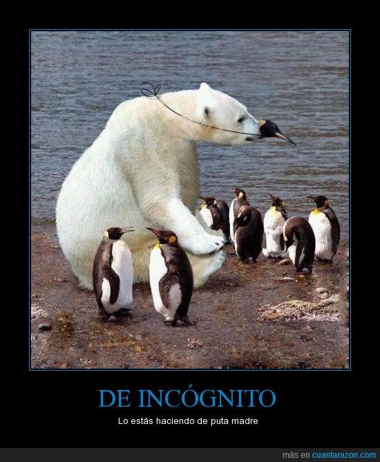 infiltrado,oso polar,pinguino