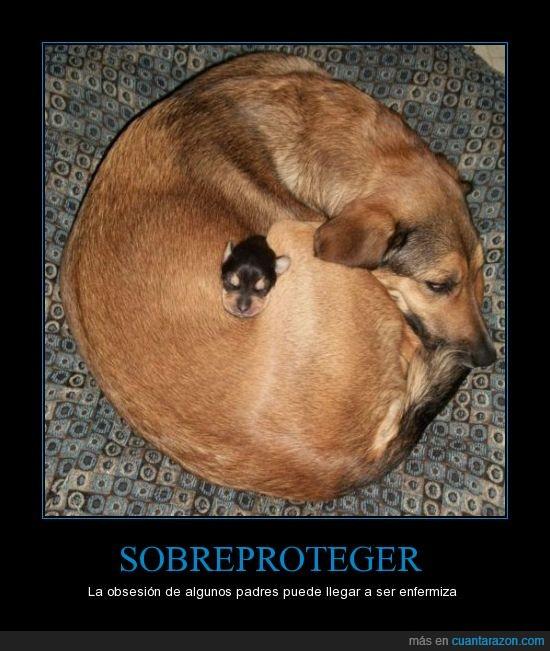 cachorro,enroscarse,madre,Perro,sobreprotejer