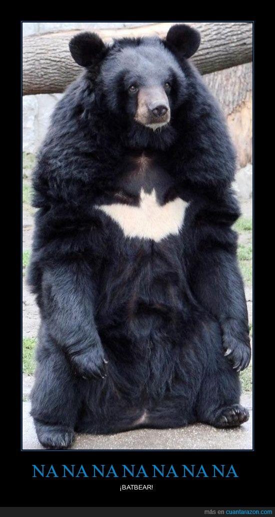 batbear,batman,murciélago,Na na,oso