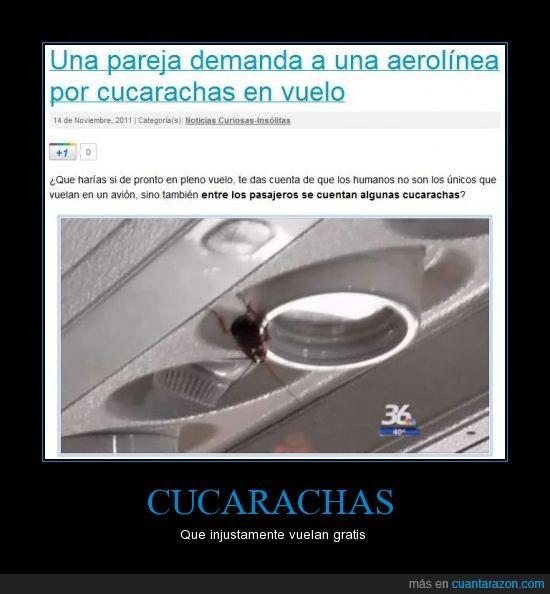 aerolínea,avión,cucarachas,demanda,gratis,vuelo