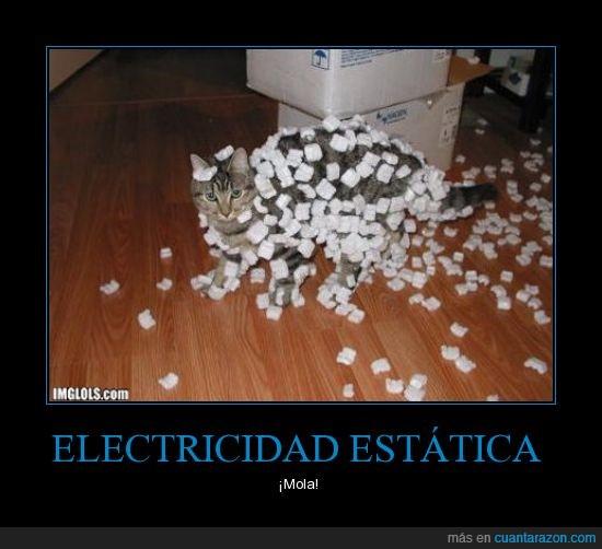 electricidad,gato,parquet,porexpan