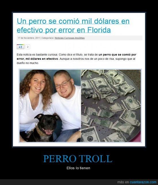 dinero,dueños,error,perrro,troll